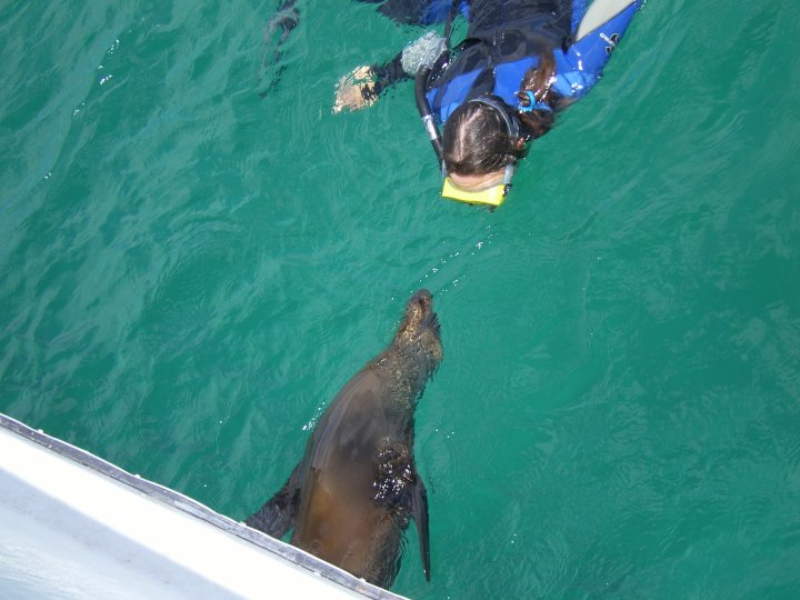 Playing with sealions