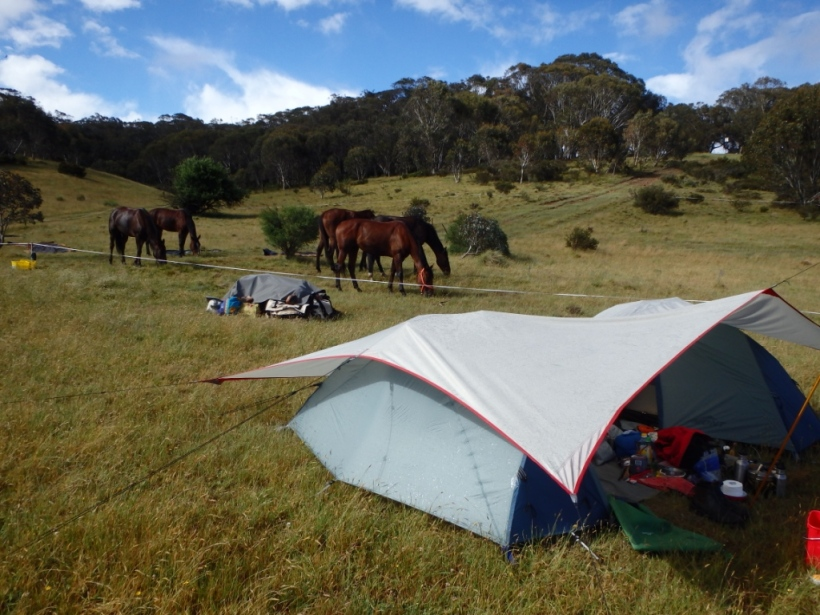 Our camp - second tent phase! The grey lump near the horses is all the horse gear